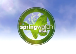 SpringWatchUSAPortfolio
